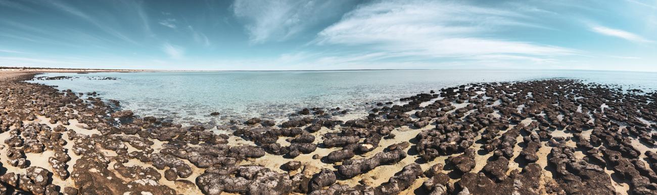 Hamelin pool côte ouest en australie