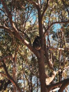 Yancheep national park côte ouest en Australie