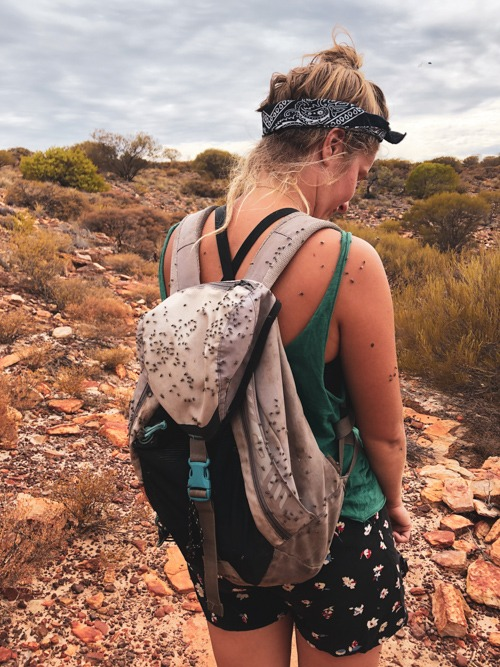 mouche road trip côte ouest Australie