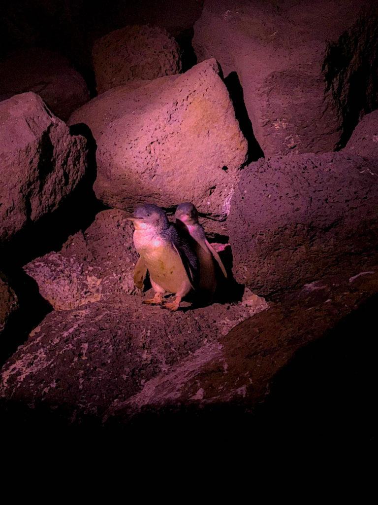 pingouin Melbourne