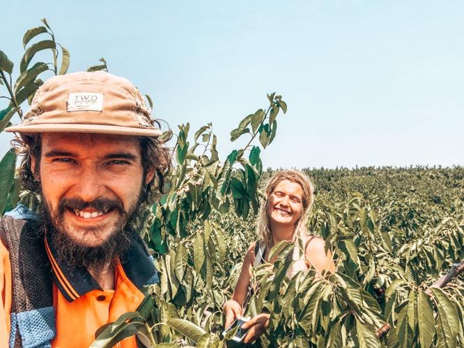 Les bons voyageurs fruit picking en australie
