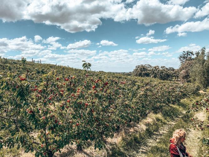 jobs fruit picking en australie