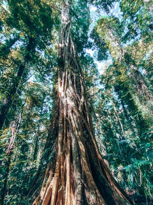 arbres dorrigo National Park