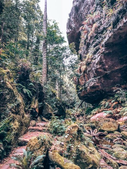 forêt deux jours aux blue mountains