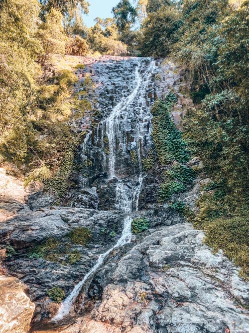 Tristania falls New South Wales Dorrigo national park